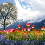 Цветные памятники